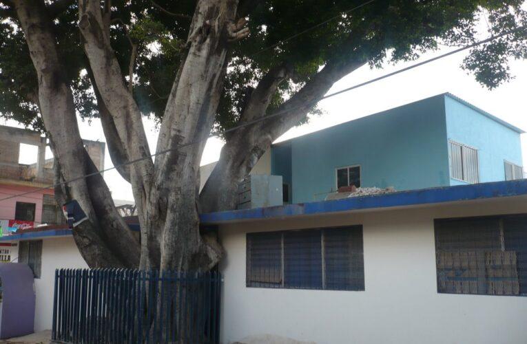 Desoyen protestas sobre derribo de árbol emblemático de Chilapa